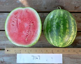 Photo of 7167 watermelon