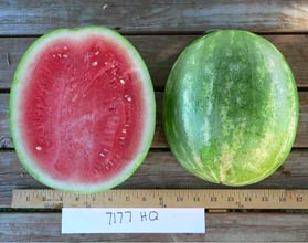 Photo of 7177HQ watermelon