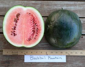 Photo of Blacktail Mountain watermelon