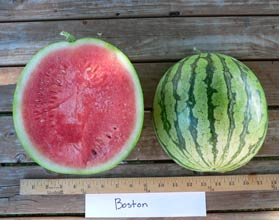 Photo of Boston watermelon