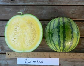 Photo of Butterball watermelon