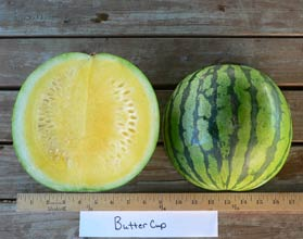 Photo of Buttercup watermelon