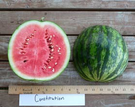 Photo of Constitution watermelon