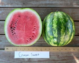 Photo of Crimson Sweet watermelon