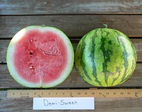Photo of Demi Sweet watermelon