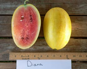 Photo of Diana watermelon