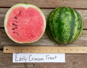 Photo of Early Crimson Treat watermelon