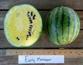 Photo of Early Moonbeam watermelon