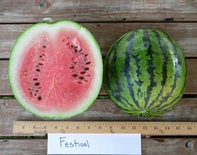 Photo of Festival watermelon