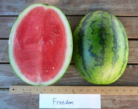 Photo of Freedom watermelon