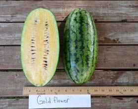 Photo of Gold Flower watermelon
