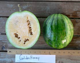 Photo of Golden Honey watermelon
