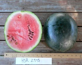 Photo of HSR 2945 watermelon