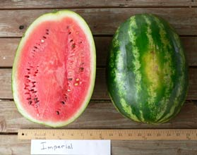 Photo of Imperial watermelon