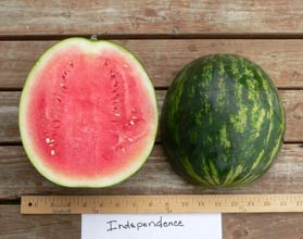 Photo of Independence watermelon