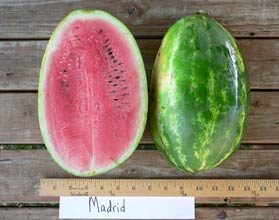 Photo of Madrid watermelon