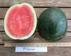 Photo of Millenium watermelon