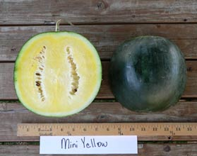 Photo of Mini Yellow watermelon