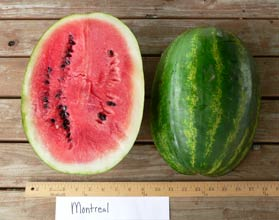 Photo of Montreal watermelon