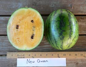 Photo of New Queen watermelon