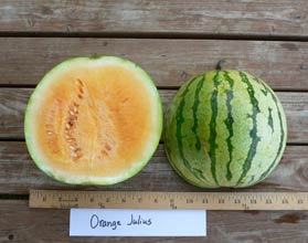 Photo of Orange Julius watermelon