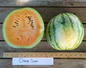 Photo of Orange Sweet watermelon