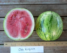 Photo of Osh Kirgizia watermelon