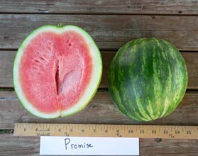 Photo of Promise watermelon