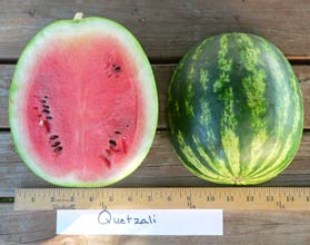 Photo of Quetzali watermelon