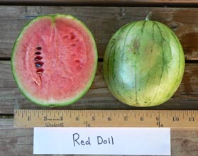 Photo of Red Doll watermelon
