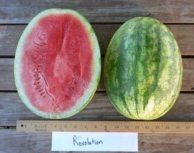 Photo of Revolution watermelon