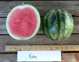 Photo of Ruby watermelon