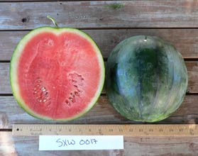 Photo of SXW 0017 watermelon