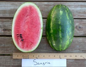 Photo of Sangria watermelon