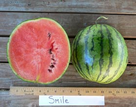 Photo of Smile watermelon