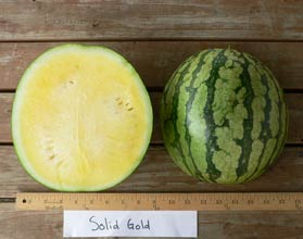Photo of Solid Gold watermelon