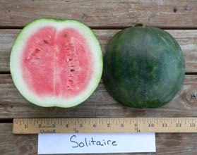 Photo of Solitaire watermelon