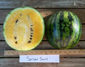 Photo of Sorbet Swirl watermelon