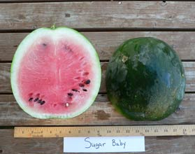 Photo of Sugar Baby watermelon