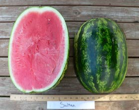 Photo of Sultan watermelon