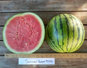 Photo of Summer Sweet #2532 watermelon