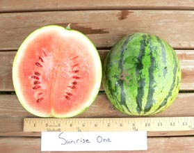 Photo of Sunrise One watermelon