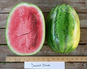 Photo of Sweet Diane watermelon