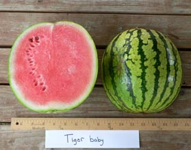 Photo of Tiger Baby watermelon