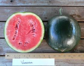 Photo of Vanesssa watermelon