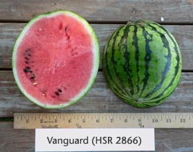 Photo of Vanguard (HSR 2866) watermelon