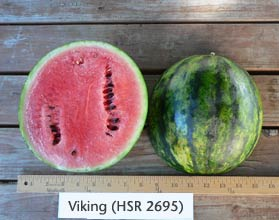 Photo of Viking (HSR 2695) watermelon