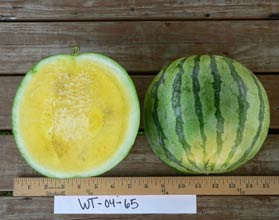 Photo of WT-04-65 watermelon