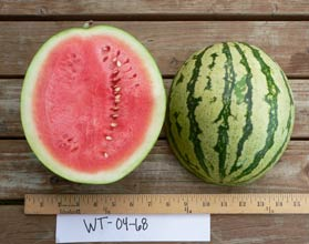 Photo of WT-04-68 watermelon