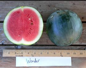 Photo of Wonder watermelon